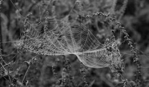 Spring cleaning - Spiderweb